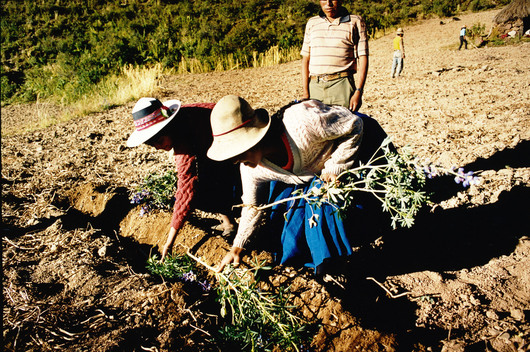 Sustainable Agriculture in Bolivia