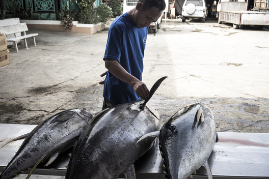 Sustainably Caught Tuna in the Philippines