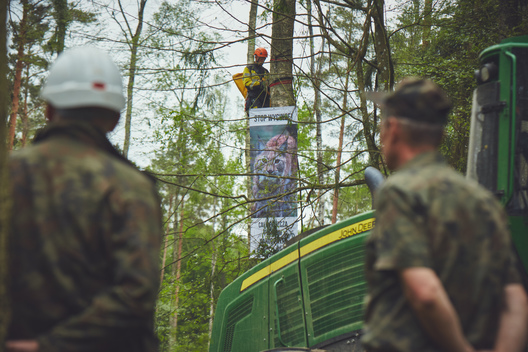 Stop Logging in Bialowieza Forest Action in Poland (2nd Action)