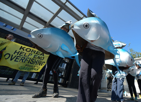 Tuna Mascots at Korean Embassy in Manila