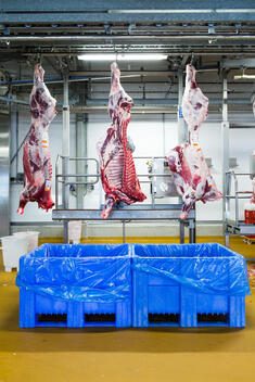 Industrial Meat Production in Germany