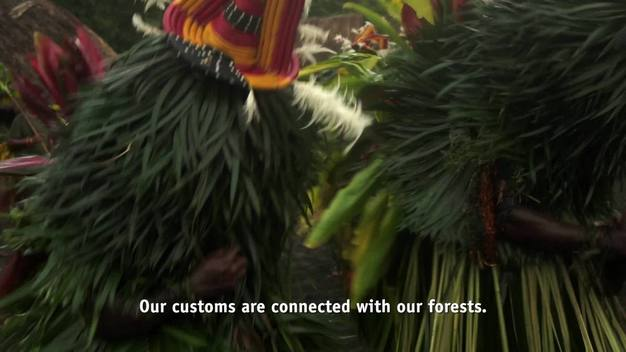 Ecoforestry in Papua New Guinea - English Version