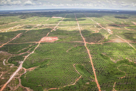 Palm Oil Concession in Southern Papua