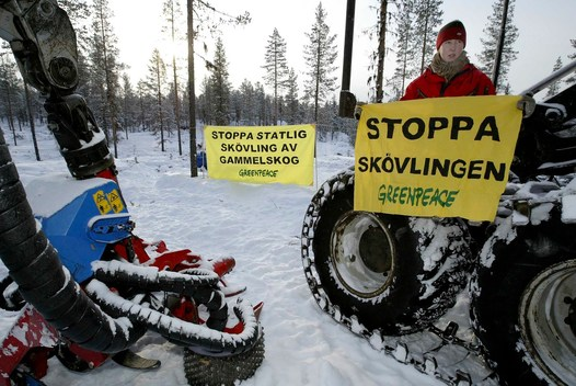 Action in Pakkojakka Forest Sweden