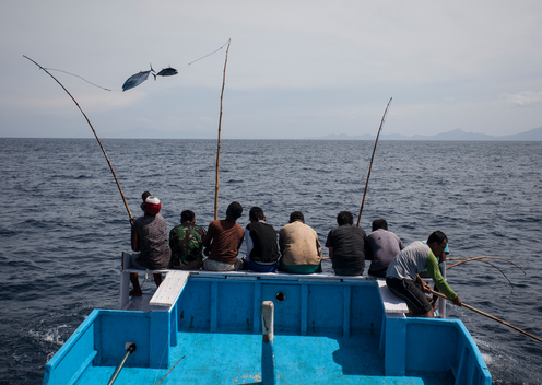 Pole and Line Sustainable Tuna Fishing in Larantuka