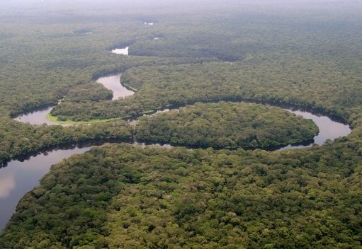 Salonga National Park in Congo