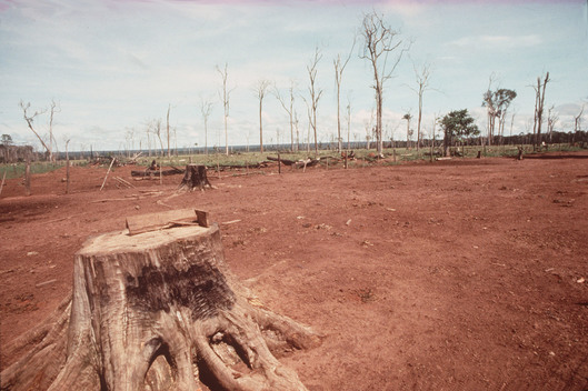 Rainforest Deforestation in Brazil