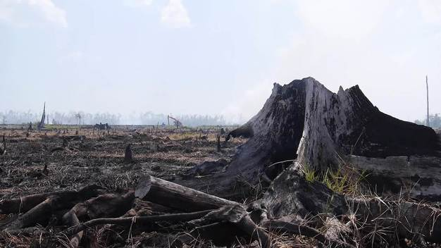 Forest Fires in Riau