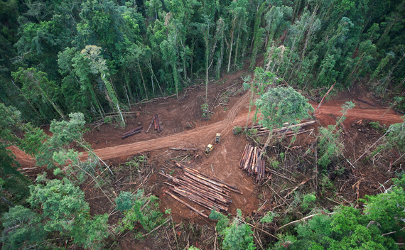 Logging Operations in Vangunu Island
