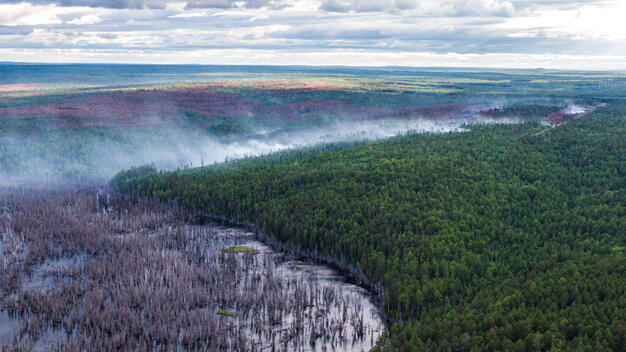 Climate Emergency: Forest Fires in Siberia