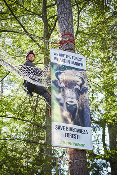 Activists in Bialowieza Forest