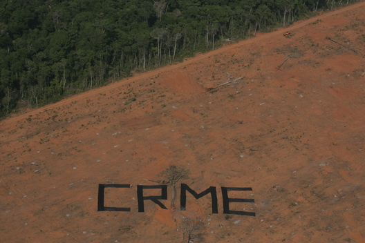Forest Crime Banner Action