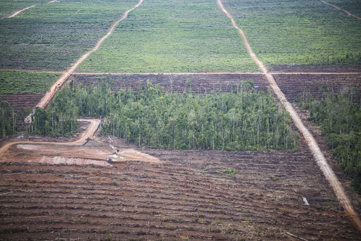 Oil Palm Plantations in Southern Papua