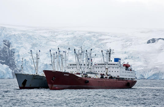 Reefer Vessels Skyfrost and Pamyat Ilicha in the Antarctic