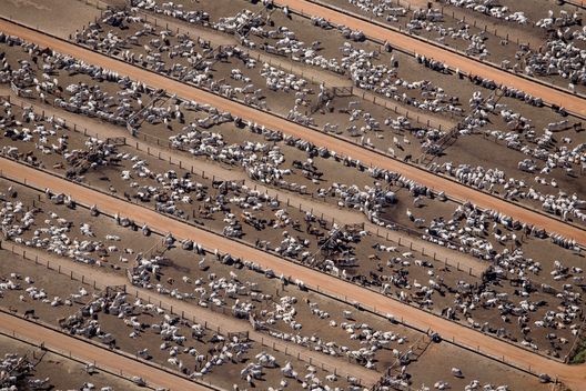 Cattle Farm in the Amazon