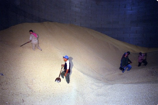 GE Action against GE Maize in Mexico