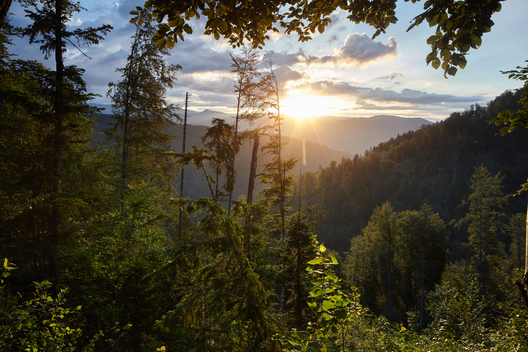 Sunrise in the Carpathian Forest in Romania