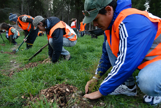 Reforestation on Landcorp Land in New Zealand
