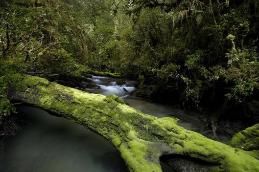 Rainforest in Patagonia Argentina Chile