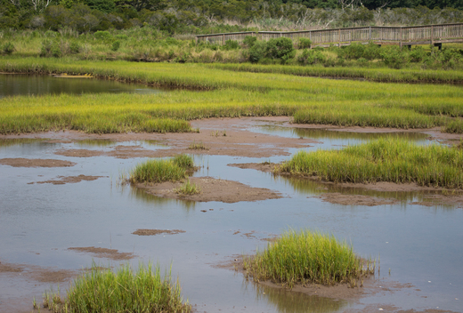 Climate Change Affecting Local Shorelines of Assateague Island in Maryland and Virginia