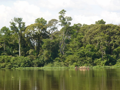 Forest in Congo