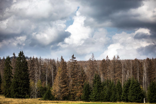 Forest Drought in Harz Mountains in Germany