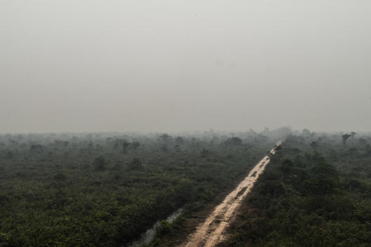 PT KU Oil Palm Concession in Jambi