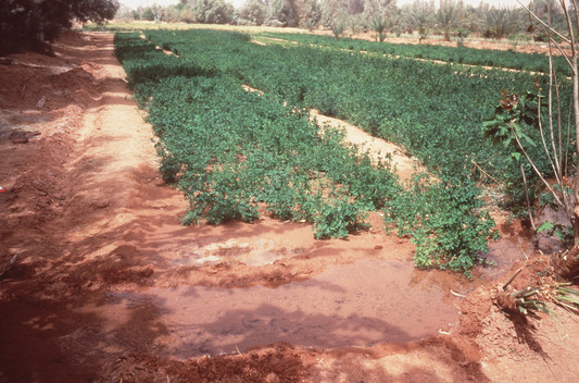 Irrigation in Libya