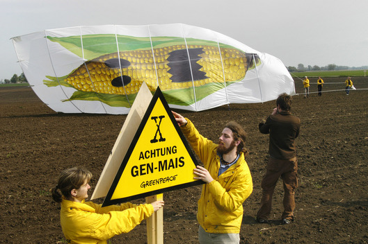 Action against Monsanto GE Corn in Germany