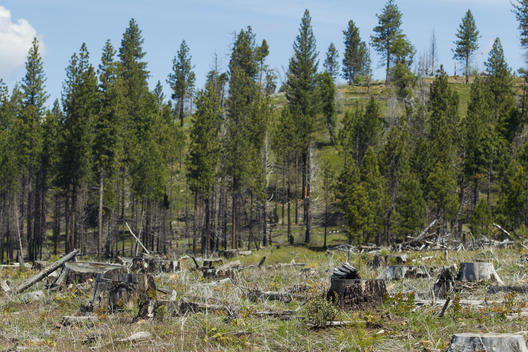 Stanislaus National Forest Post-Fire