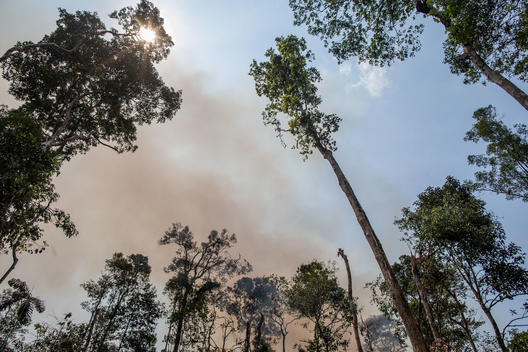 Amazon Burnt Area in Porto Velho, Rondônia, Amazon (2019)