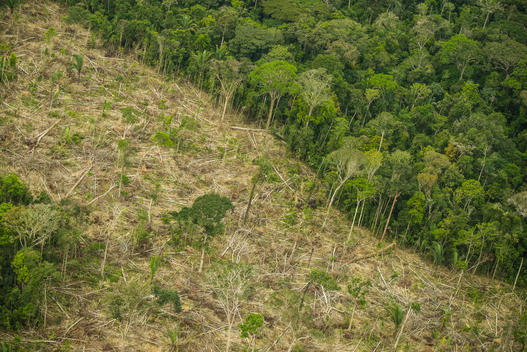 Deforestation in Karipuna Indigenous Land, Brazil