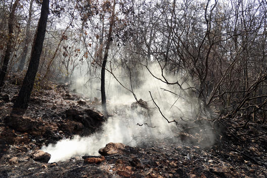 Forest Fires in Lebanon