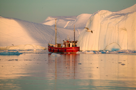 Fishing Boat Amongst Icebergs in Greenland
