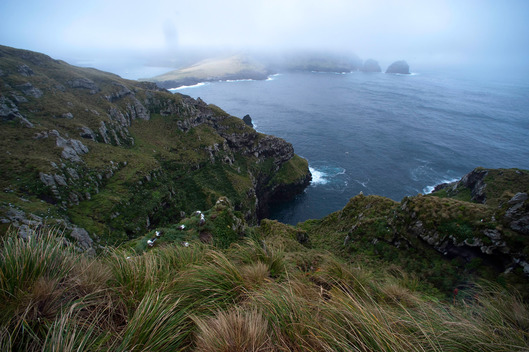 South West Cape in Auckland Island