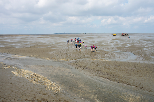 Walkers on Mud Flats in German Wadden Sea