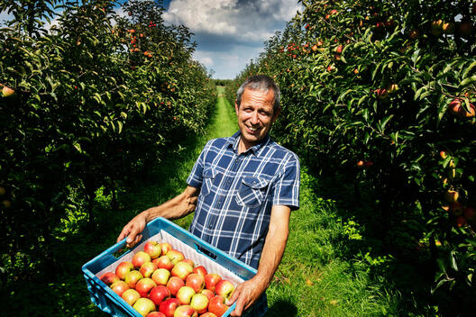 Organic Apple Farmer in Belgium