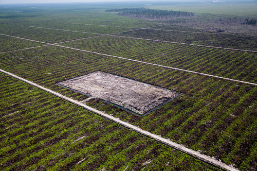 Peatland Palm Oil Plantation in Riau