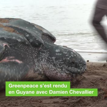 Turtle Mission in French Guiana - Web Video (FR)