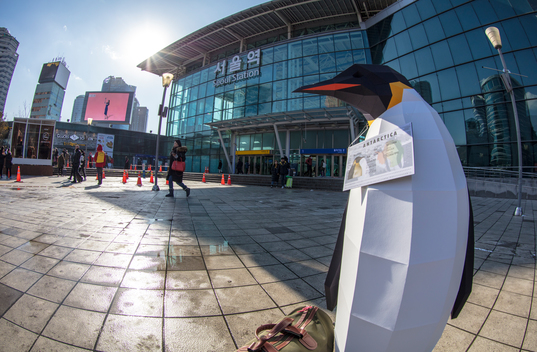 March of the Penguins in Seoul