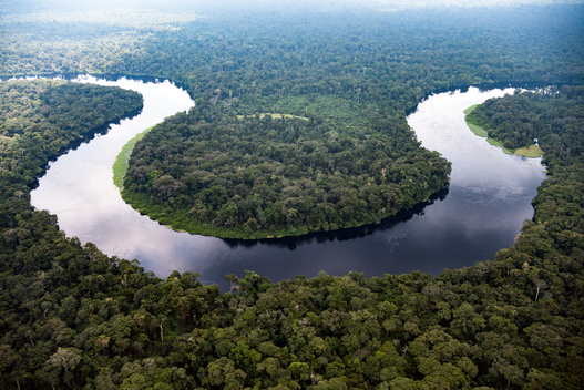 Monboyo River and Peatland Forest in DRC