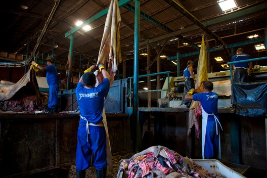 Workers at a Tannery in Brazil