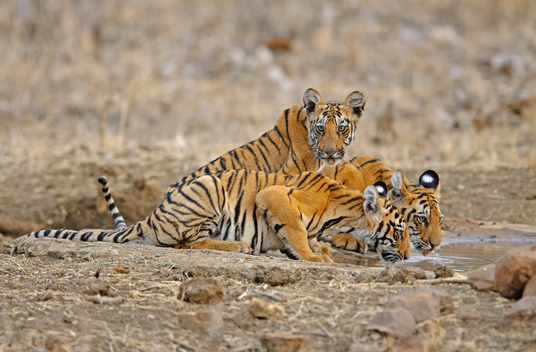 Wild Life from Central India