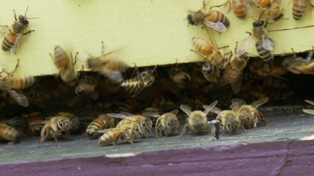 Backyard Beekeeping in Washington DC