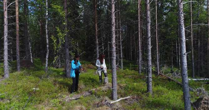 Forests in Jämtland, Sweden - Clipreel