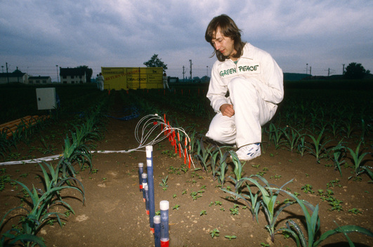 Greenpeace protest at the Ciba-Geigy trial field in Colmar, Alsace, France, where genetically manipulated corn has been released.  The aim is to cultivate corn producing the bacteria thuringensis so k