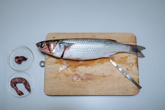 Microplastic Present in Wild Flathead Grey Mullet in Hong Kong