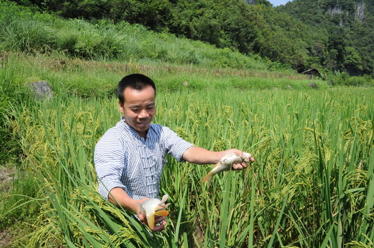 Sustainable Farmer in Guizhou, China