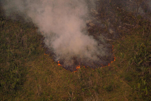 Fire Moratorium - Deforestation and Fire Monitoring in the Amazon
