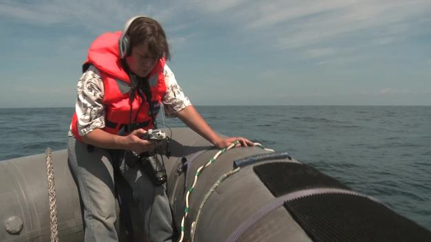 Zoologist and Whale Researcher Libby Ayre B-Roll